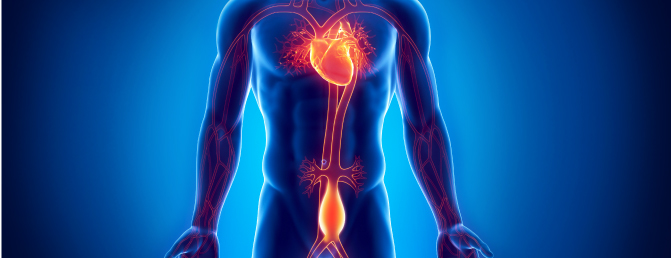 aorticaneurysm - Ανεύρυσμα κοιλιακής αορτής: Οι νέες συστάσεις παρακολούθησης ασθενών
